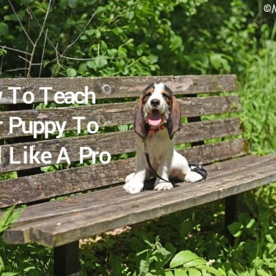 How To Teach Your Puppy To Model Like A Pro