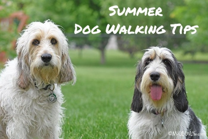 Summer Dog Walking Tips- Watch The Heat