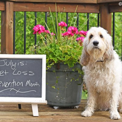 Tips To Keep Dogs Safe – National Pet Loss Prevention Month