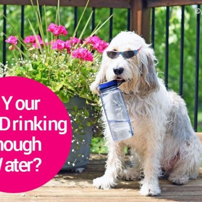 Is Your Dog Drinking Enough Water?