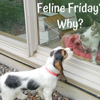 Feline Friday? But Why?