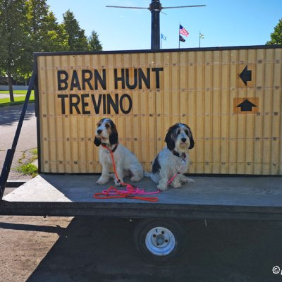 Barn Hunt Weekend – A Bust, Or Maybe Not?