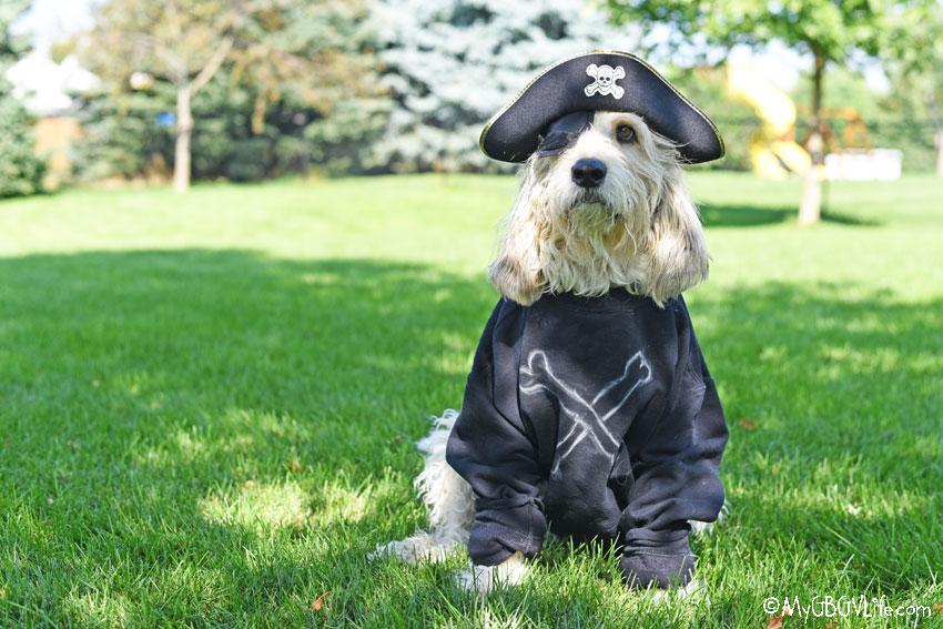 My GBGV Life Talk Like A Pirate Day
