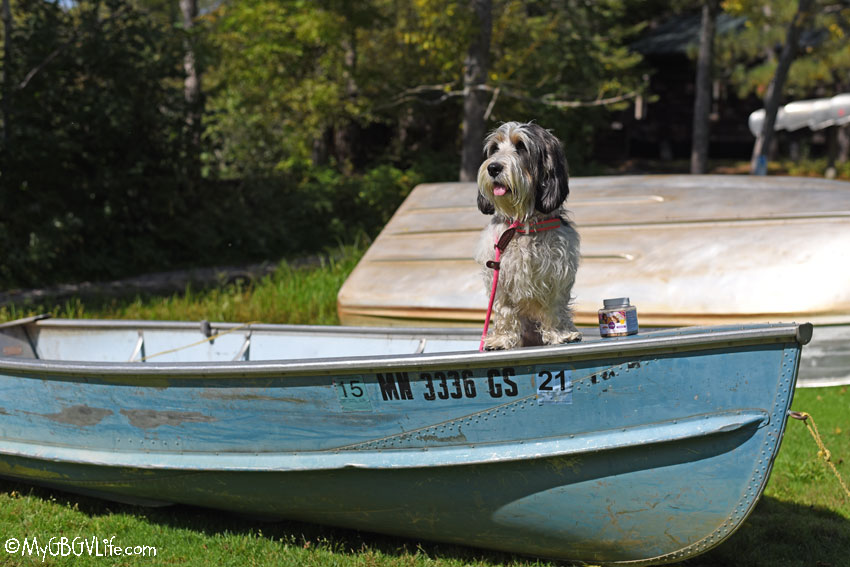 My GBGV Life on a boat