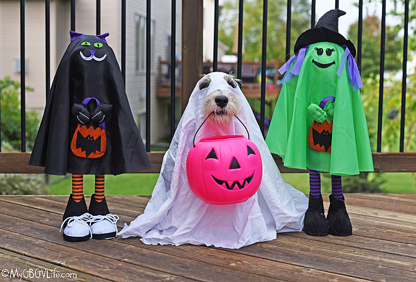 My GBGV Life Boo! Fun October Activities For Your Dog