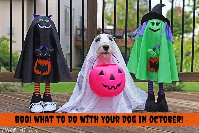 Boo! Fun October Activities For Your Dog