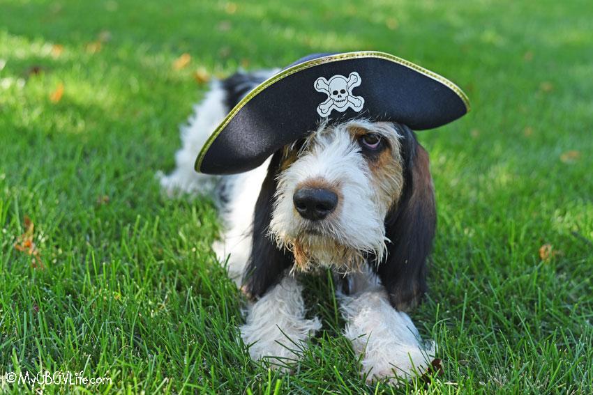 My GBGV Life landlubber pirate