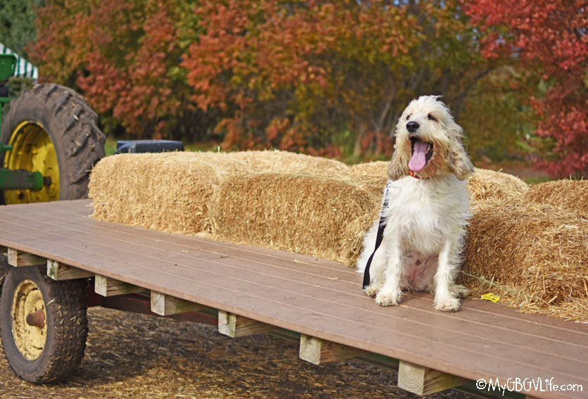 My GBGV Life hay ride