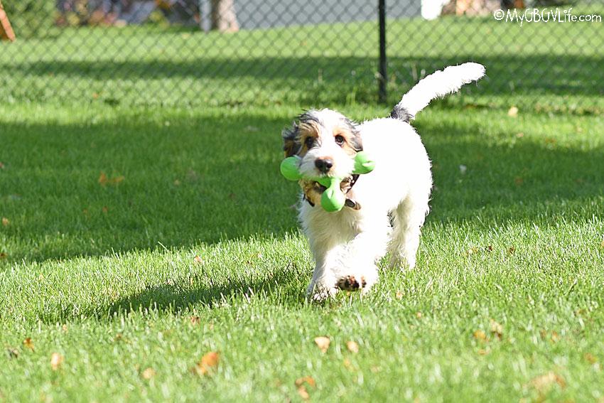 My GBGV Life happy hound fetch