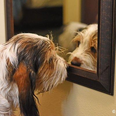 Who Is That Cute Puppy In The Mirror?