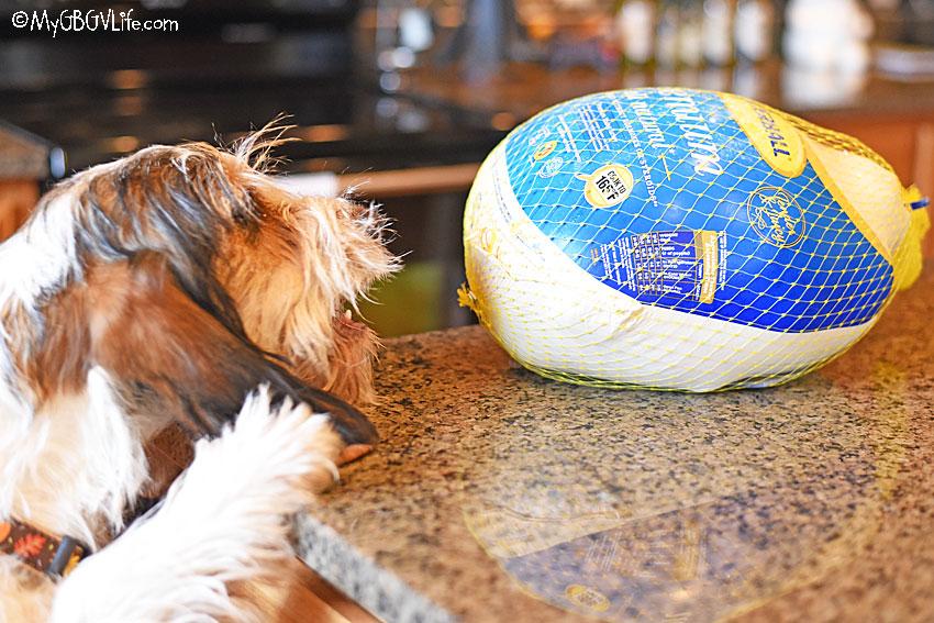 My GBGV Life stealing the turkey