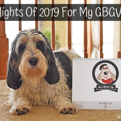 My GBGV Life Highlights Of 2019 For My GBGV Life