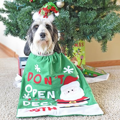 Waiting For Christmas Is Not Easy For Pups