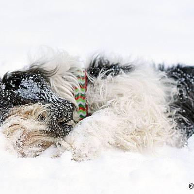 My GBGV Life The Making Of A Furry Snow Monster