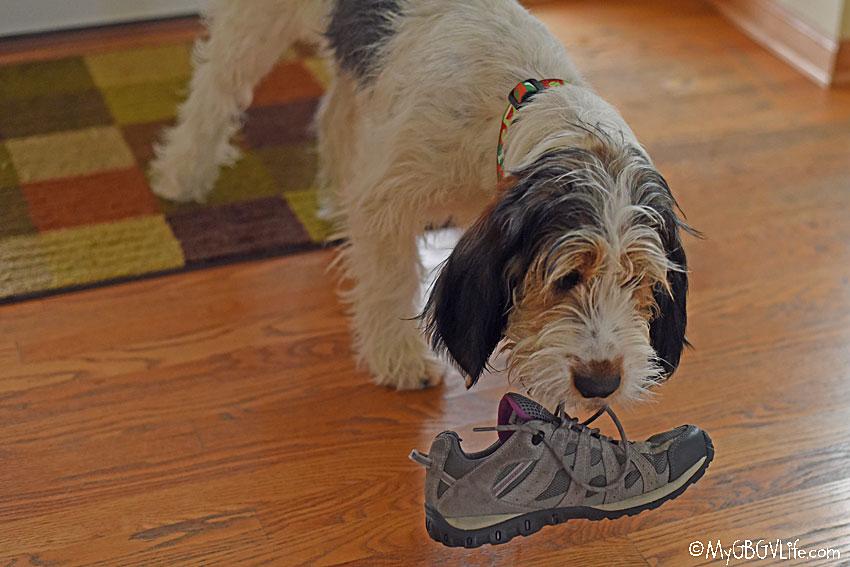 My GBGV Life canine thief