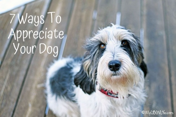 7 Ways To  Show Your Dog Appreciation