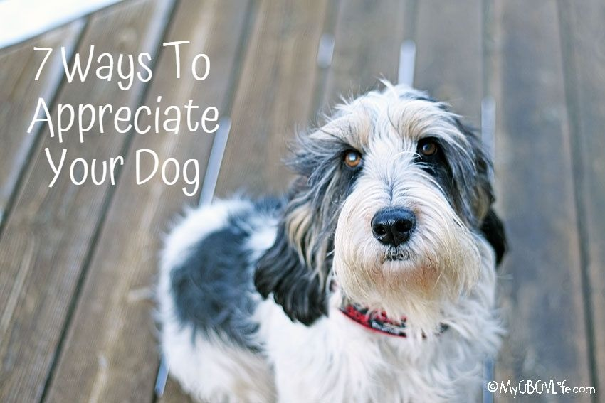 My GBGV Life 7 Ways To Show Your Dog Appreciation