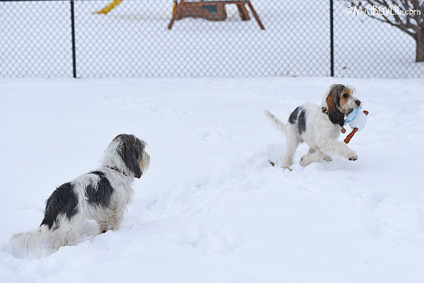 My GBGV Life Snowbound Hounds Will Love This!
