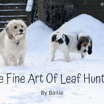 My GBGV Life The Fine Art Of Leaf Hunting - By Bailie