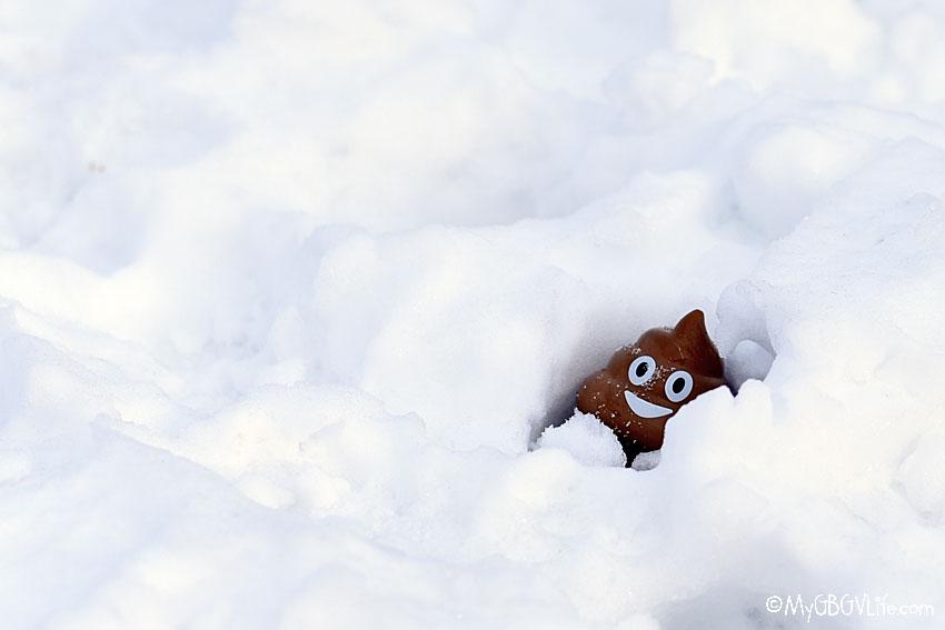 buried poop