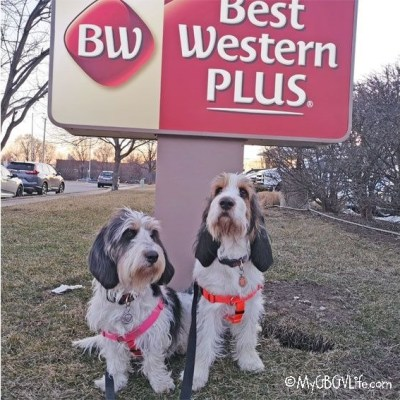 Best Western Plus – A Dog Friendly Hotel