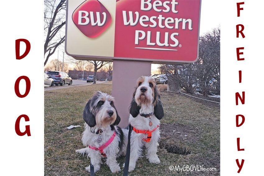 My GBGV Life Best Western Plus - A Dog Friendly Hotel