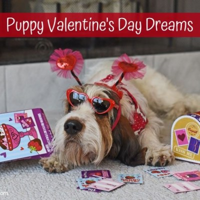 Valentine's Week – Puppy Valentine Dreams