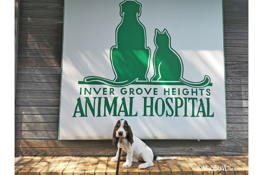 My GBGV Life first vet visit