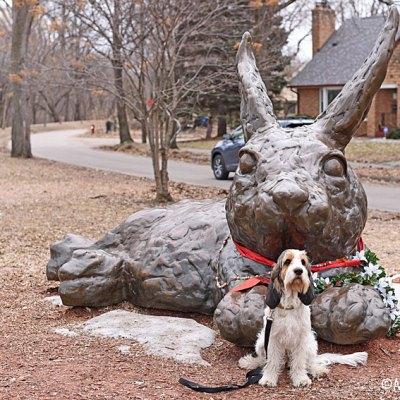 The Minnehaha Bunny – Olivia's Birthday Week Begins