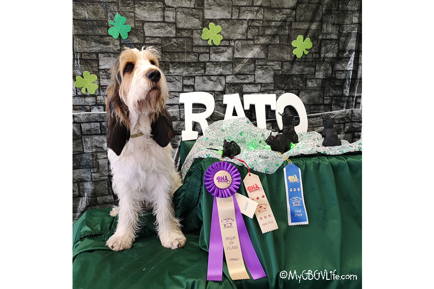 My GBGV Life Olivia's 7th Performance Title - RATO