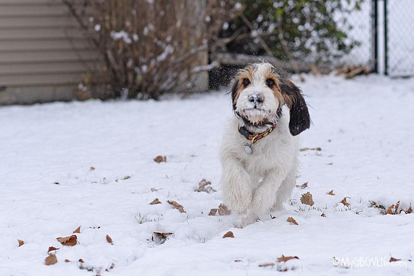 My GBGV Life first snowfall