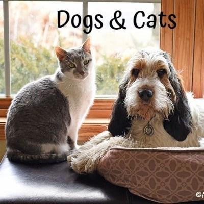 My GBGV Life Love Between A Dog And A Cat - Olivia & Bert