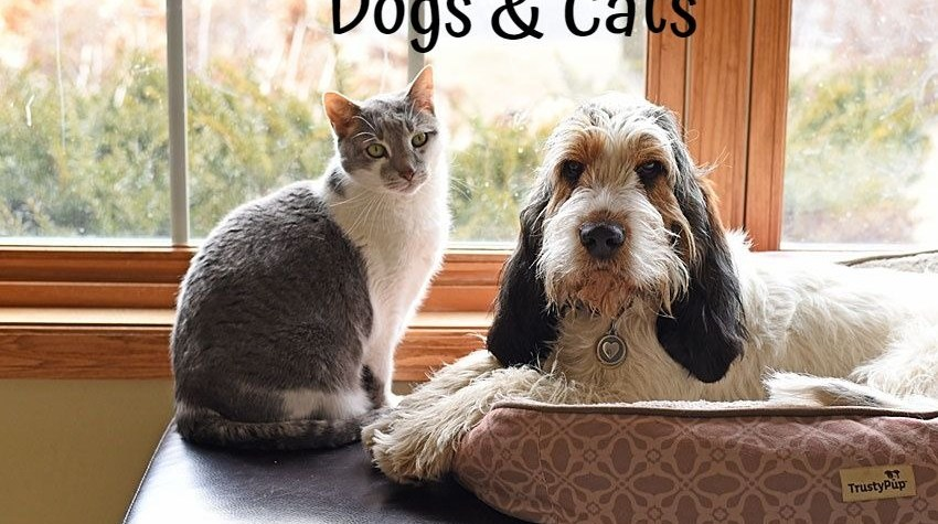 My GBGV Life Love Between A Dog And A Cat - Olivia & Bert