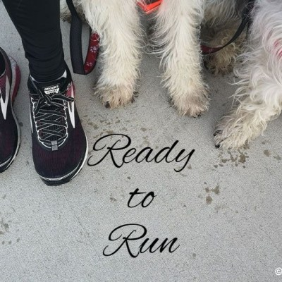 How To Train Your Canine Running Partner