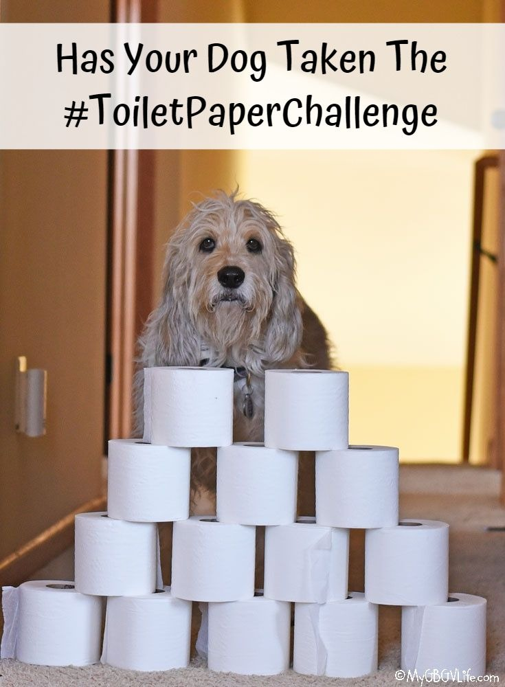My GBGV Life Has Your Dog Taken The #ToiletPaperChallenge