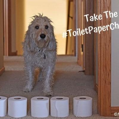 Has Your Dog Taken The #ToiletPaperChallenge