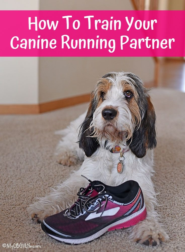 My GBGV Life How To Train Your Canine Running Partner