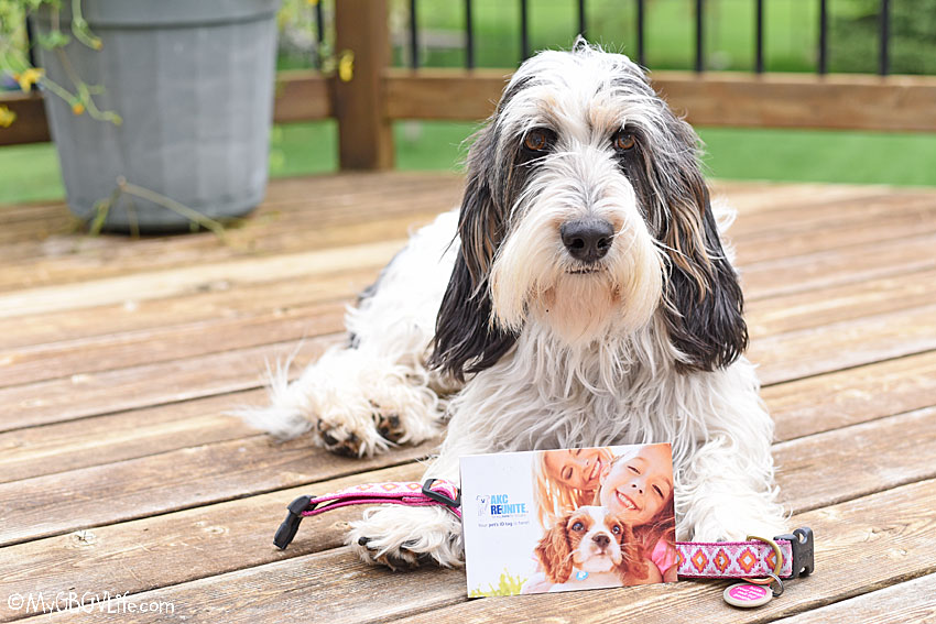 My GBGV Life May Is Chip Your Pet Month - Is Your Pet Chipped?