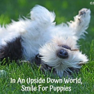My GBGV Life In An Upside Down World, Smile For Puppies