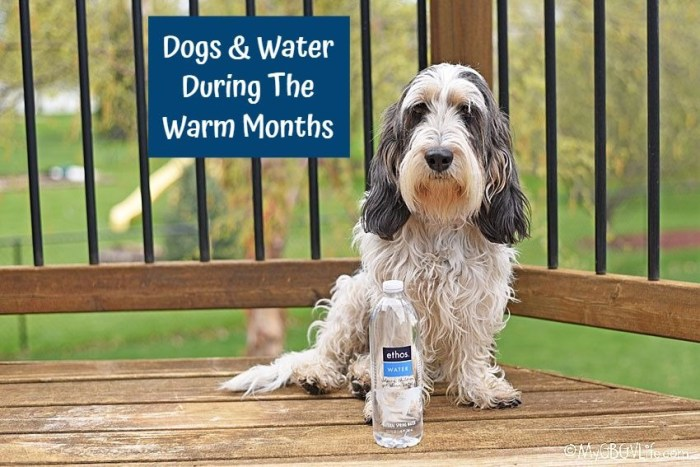 Dogs And Water During The Warm Months