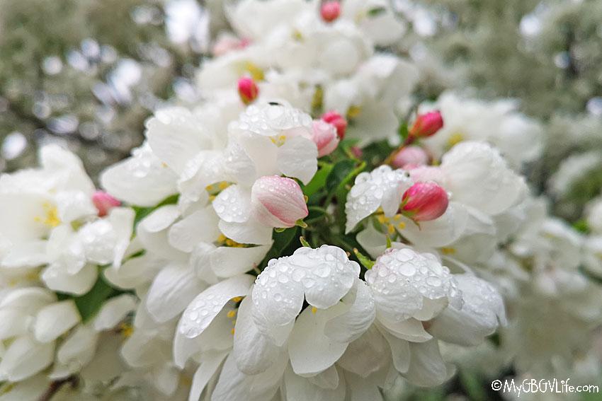 My GBGV Life flower