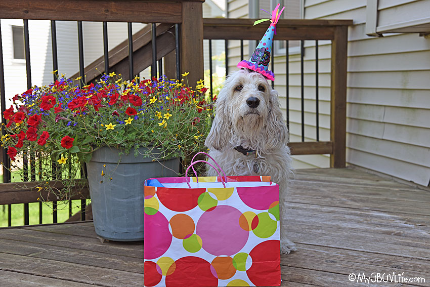 My GBGV Life Doggy Birthday Parties Can Be So Much Fun!