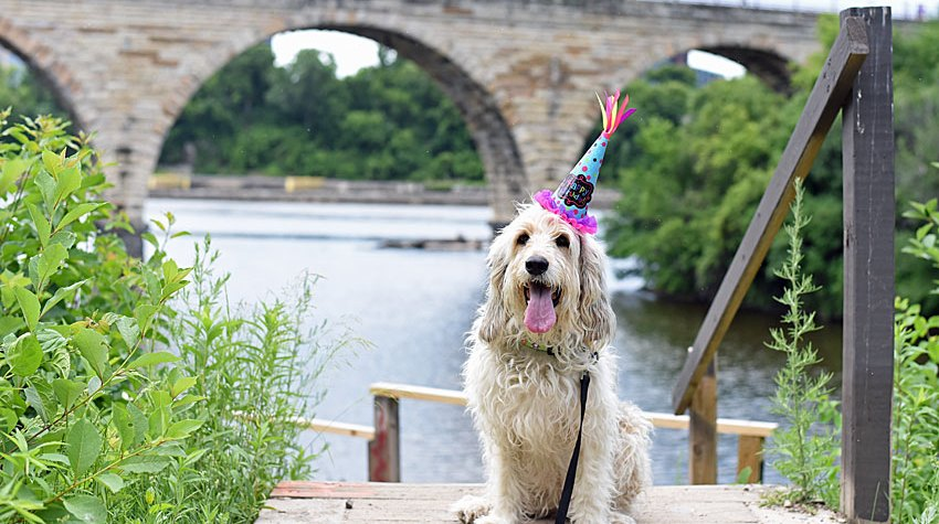 My GBGV Life Today Bailie Turns Lucky Seven - Happy Birthday!