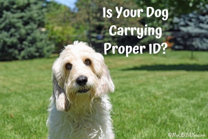 Is Your Dog Carrying Proper ID?