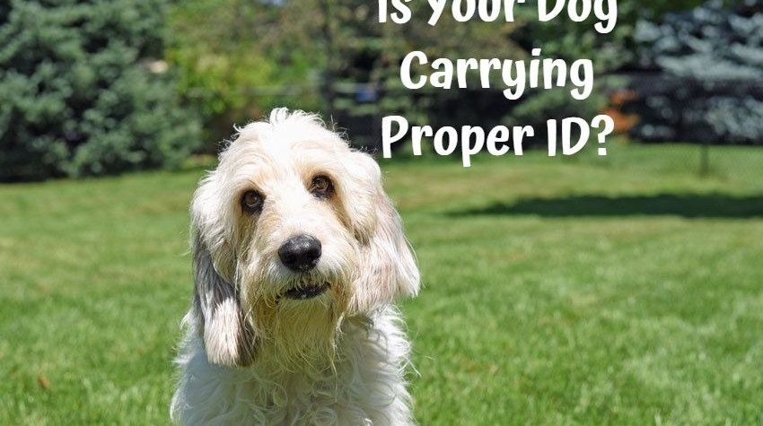 My GBGV Life Is Your Dog Carrying Proper ID?