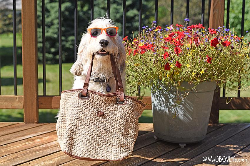 My GBGV Life Bailie with purse