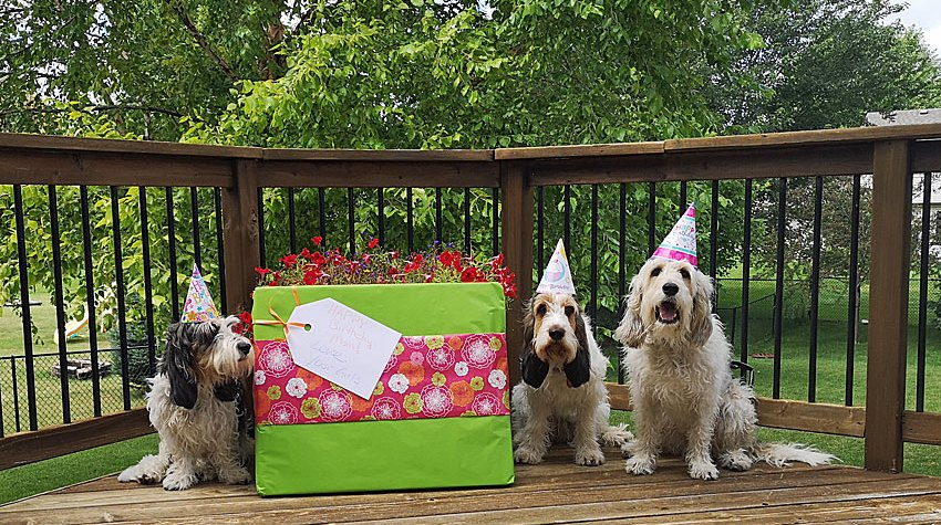 My GBGV Life A Howling Happy Birthday To Our Mom Today!