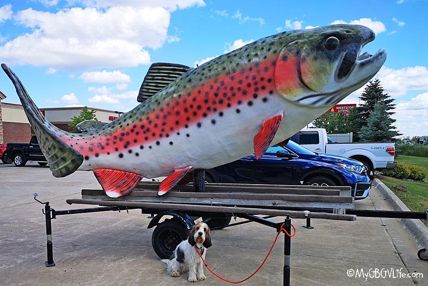 My GBGV Life giant fish