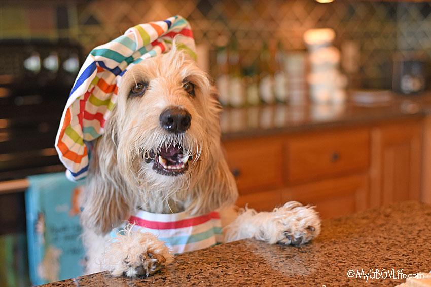 My GBGV Life happy hound