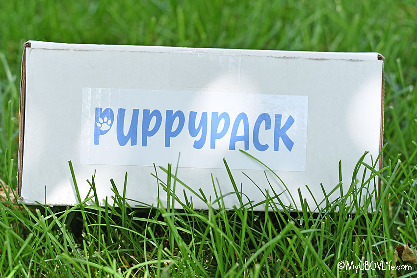 My GBGV Life Introducing PuppyPack - A New Way To Spoil Your Pup